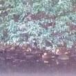 料亭ランチ&鴨池