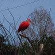 東武動物公園にて早春の一日を過ごすこと
