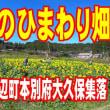 紅葉時期のひまわり畑『遅咲きのひまわり畑』