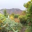 1014 越後駒ヶ岳(百名山)
