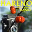 10/11   かぼちゃ? いいえ ソラナムです♫  札幌フォトスタジオハレノヒ
