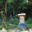 スズメバチの襲撃