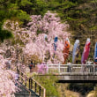 20/Apr 富士山周遊の星空と花と鳥