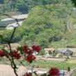 彩の国・・・波久礼・・・ツツジ満開の金尾山から・・・SLパレオエクスプレス号を俯瞰