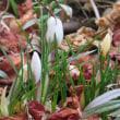 モズと庭の花
