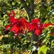 滝野すずらん丘陵公園の秋