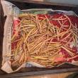 小豆、エビスグサ、アケビなど収穫ラッシュ