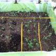 種まき分植え替え