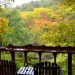 「台風来るぞ」の日、一段と色鮮やかな午後の森。