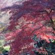 楽しみにしていた横浜三渓園の紅葉を見に行きました