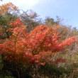 豊能町の紅葉