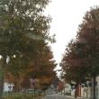 好きな通り道。