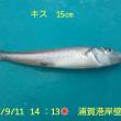 笑転爺の釣行記 9月11日☀☀☂ 久里浜・浦賀