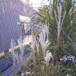 屋上は植物園