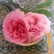 【食べる薔薇】の注文について