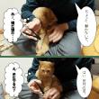 茶トラ猫、つくし君の爪切り。