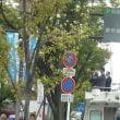 小泉進次郎2017