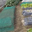 今年の初仕事は、一雨前の畝作り