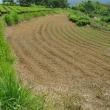 生姜畑の状況