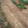 本日の農作業(H30.3.15)