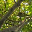 【参加者募集中】鳥笛とバードコール工作体験(8/4開催)