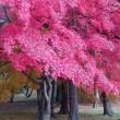 紅葉と秋ドラマ