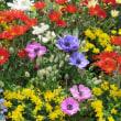 8月6日 今日の日に花いっぱいを