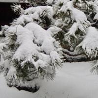 再び、積もりました。金沢は、明るくなってから、積雪が増えたようです。