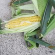 無農薬で栽培している野菜について ①
