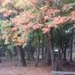 色づく葉、白い息・・・の季節になった