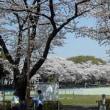 2018-03-29 今日の記録 小平市中央公園の桜が満開