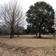 2月の砧公園