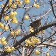 春の声 -1 ・・・ voice of spring -1