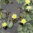 ◆色んな蓮の花に出会える街、韓国♪