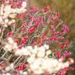 かまくら浄妙寺の春の花