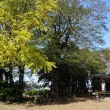 楽輪号で大島畠田遺跡を訪ねる。