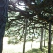金刀比羅宮と栗林公園へバス旅行