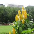 日比谷公園の夏美人花