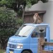 サルが来た!