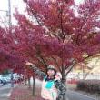 奈良、京都は紅葉真っ盛り!