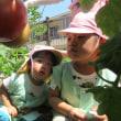 おいしい夏野菜♪