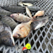 下津井のチヌ釣り