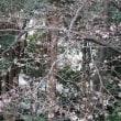 高松桜まつりの会場の桜が咲き始めました