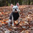 落ち葉の絨毯 ~ fallen leaves ~