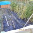 キヌサヤの畝をかたづけました