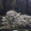北広島町橋山、さくら 2018.04.18