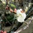 寒さの中に春の足音が~
