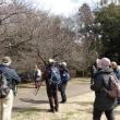 日曜散歩:やっぱり梅、河津桜