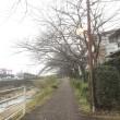 五条から都府楼前まで歩いて(*´∇`*)