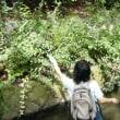 水路周辺清掃と草花調査 (夏季)